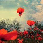 Poppy Version 2 by FrancescaDelfino