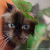 Plants lover by FrancescaDelfino