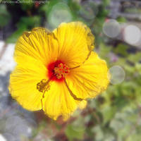 Yellow flower by FrancescaDelfino