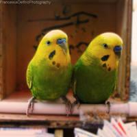 Parrots by FrancescaDelfino