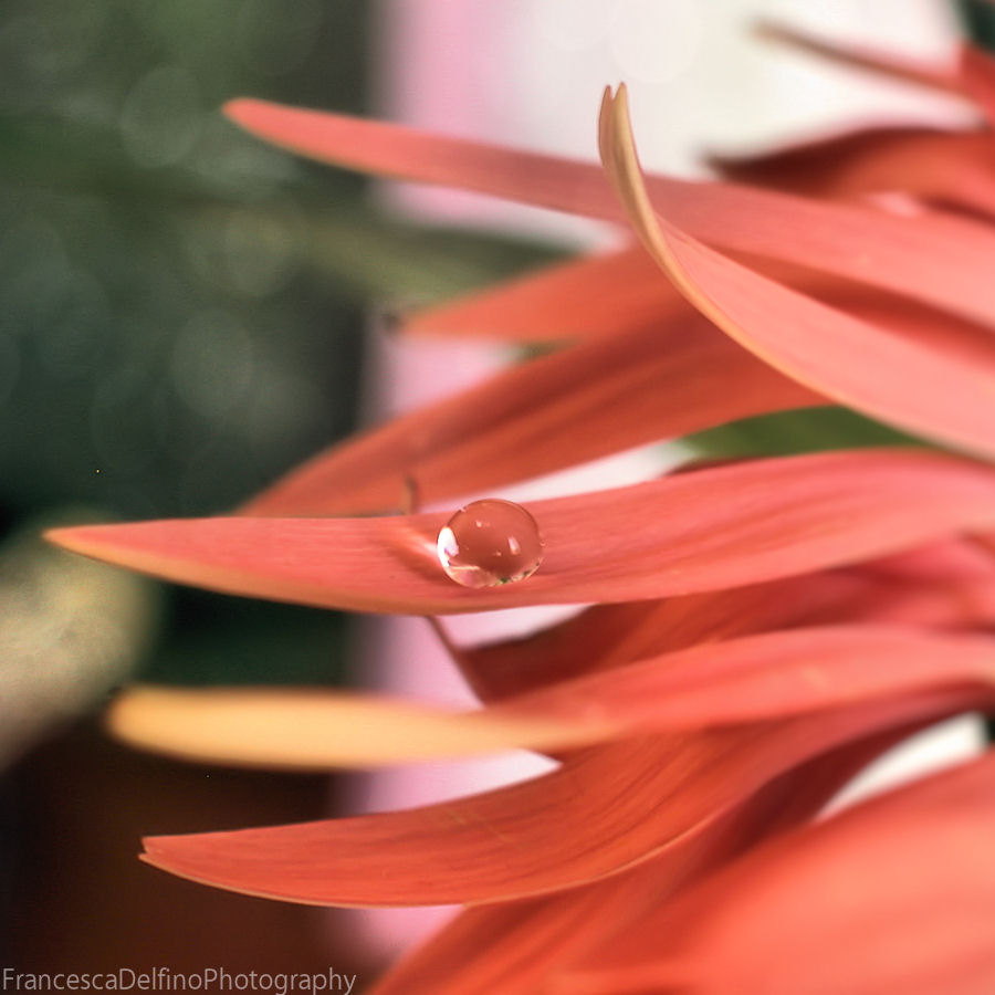 Lonely drop by FrancescaDelfino