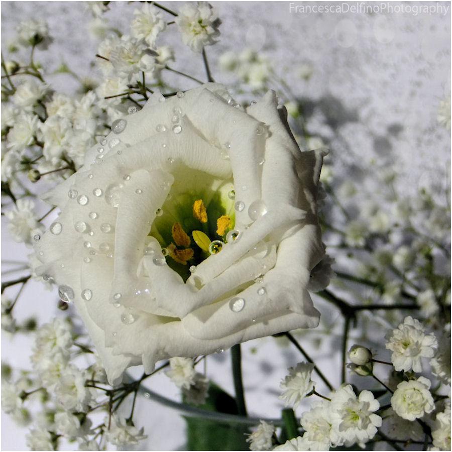 Tiny white flower by FrancescaDelfino