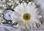 Don't Waste Your Time by FrancescaDelfino