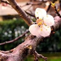 Spring is coming by FrancescaDelfino