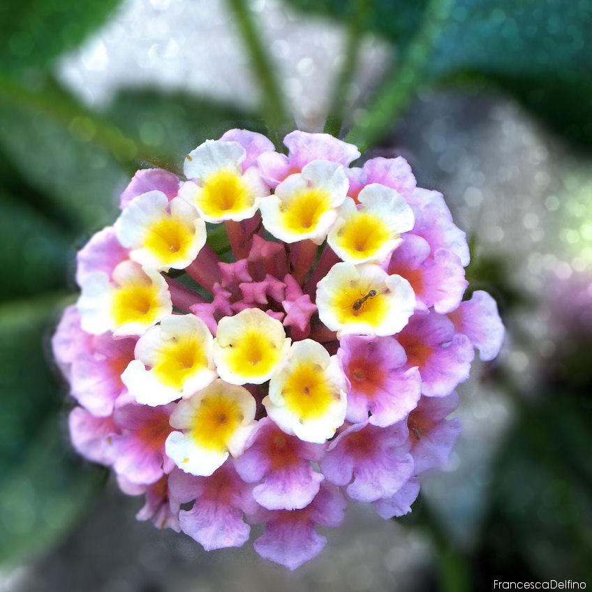 white flower ' by francescadelfino on deviantart, Beautiful flower