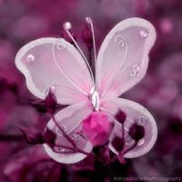 Butterfly 1 by FrancescaDelfino