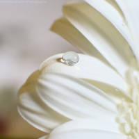 A delicate and soft drop by FrancescaDelfino