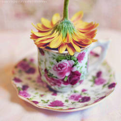 Gerbera tea by FrancescaDelfino