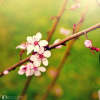 Spring 2014 I by FrancescaDelfino