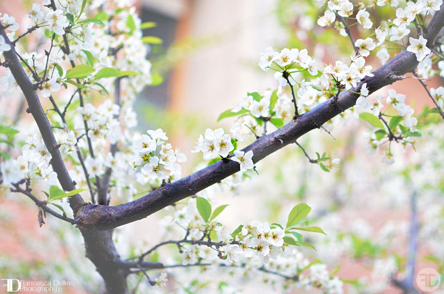 The beauty of spring 2 by FrancescaDelfino