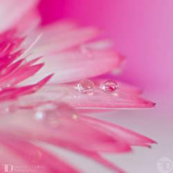 Drops of sweetness by FrancescaDelfino