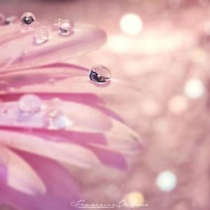 Pink drop by FrancescaDelfino