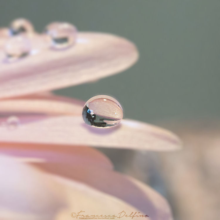 Drop 10 by FrancescaDelfino