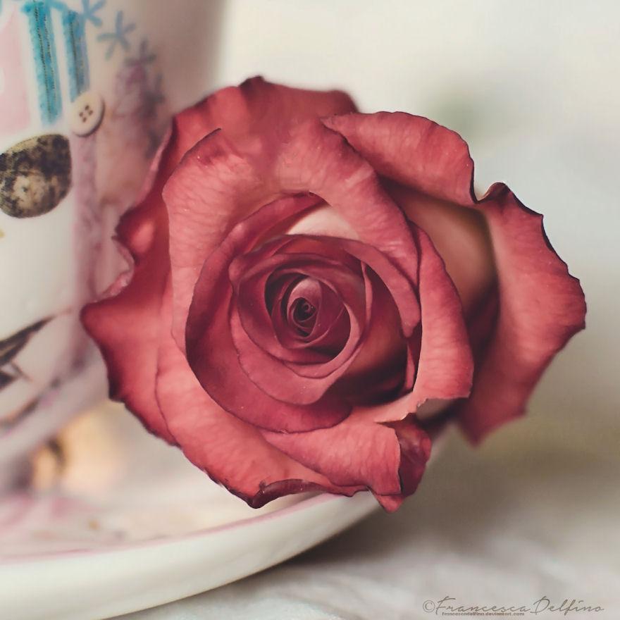 Rose tea 2 by FrancescaDelfino