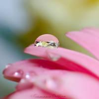 Waterdrop by FrancescaDelfino