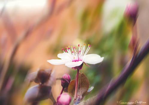 Spring 2015 C by FrancescaDelfino