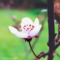 Spring 2015 D by FrancescaDelfino