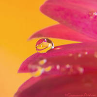 Drop 4 by FrancescaDelfino