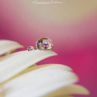 Drop 7 by FrancescaDelfino