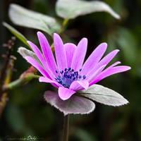 An intrusive flower by FrancescaDelfino
