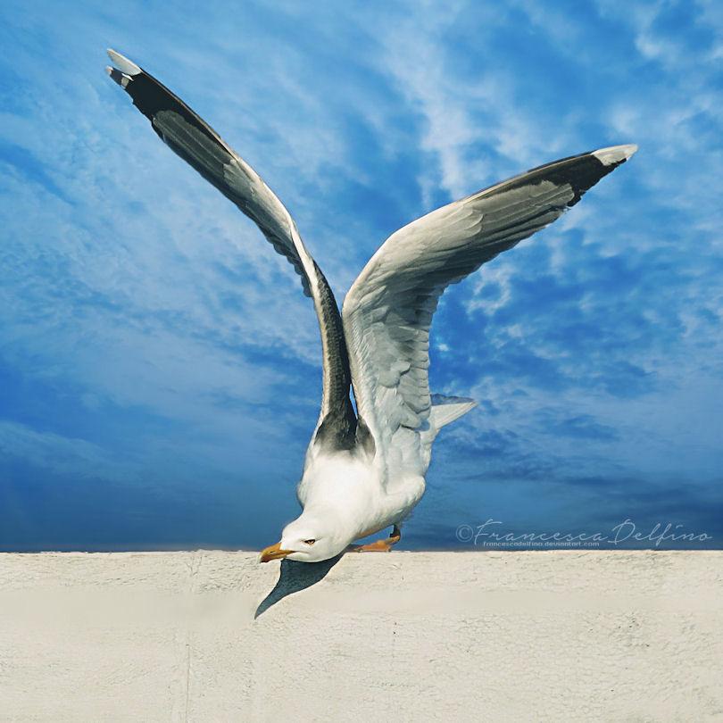 I can fly by FrancescaDelfino