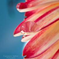 53. Waterdrop by FrancescaDelfino