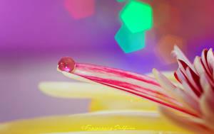 56. A drop in a petal by FrancescaDelfino