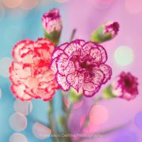 62. You brighten up my life by FrancescaDelfino