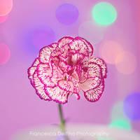 63. Burst of colors by FrancescaDelfino