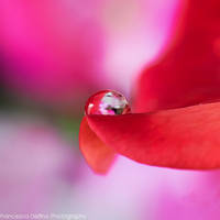 73. Waterdrop by FrancescaDelfino