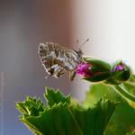 75. Butterfly
