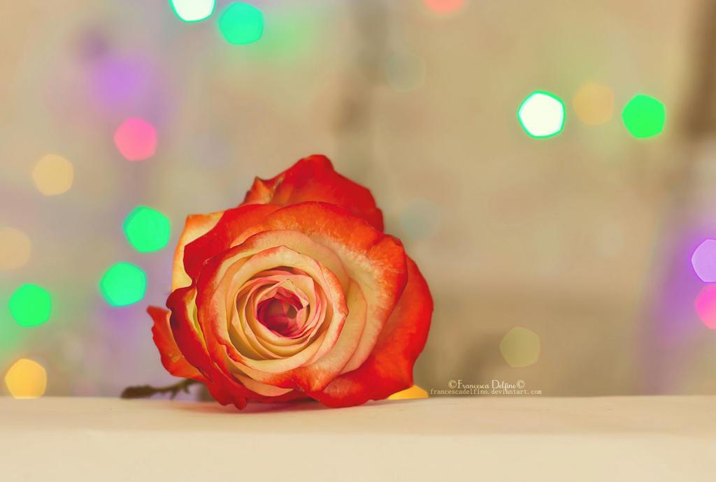 Rosa by FrancescaDelfino