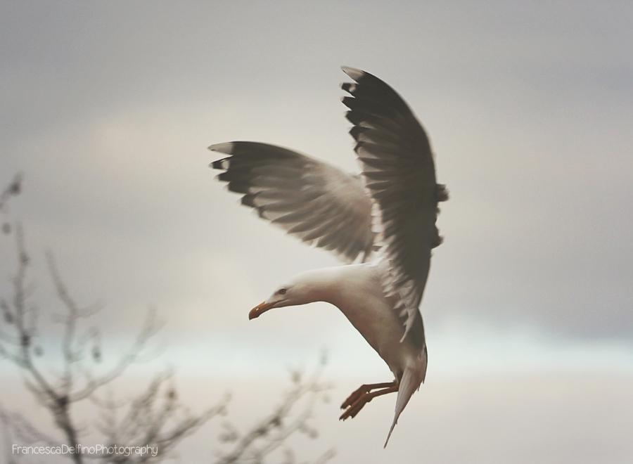 Fly by FrancescaDelfino