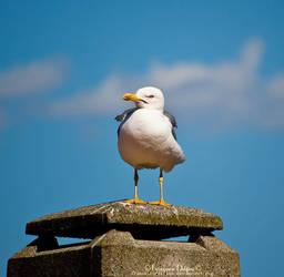 Seagull V by FrancescaDelfino