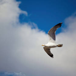 Seagull VI by FrancescaDelfino