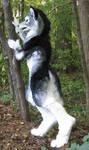 Silver werewolf side