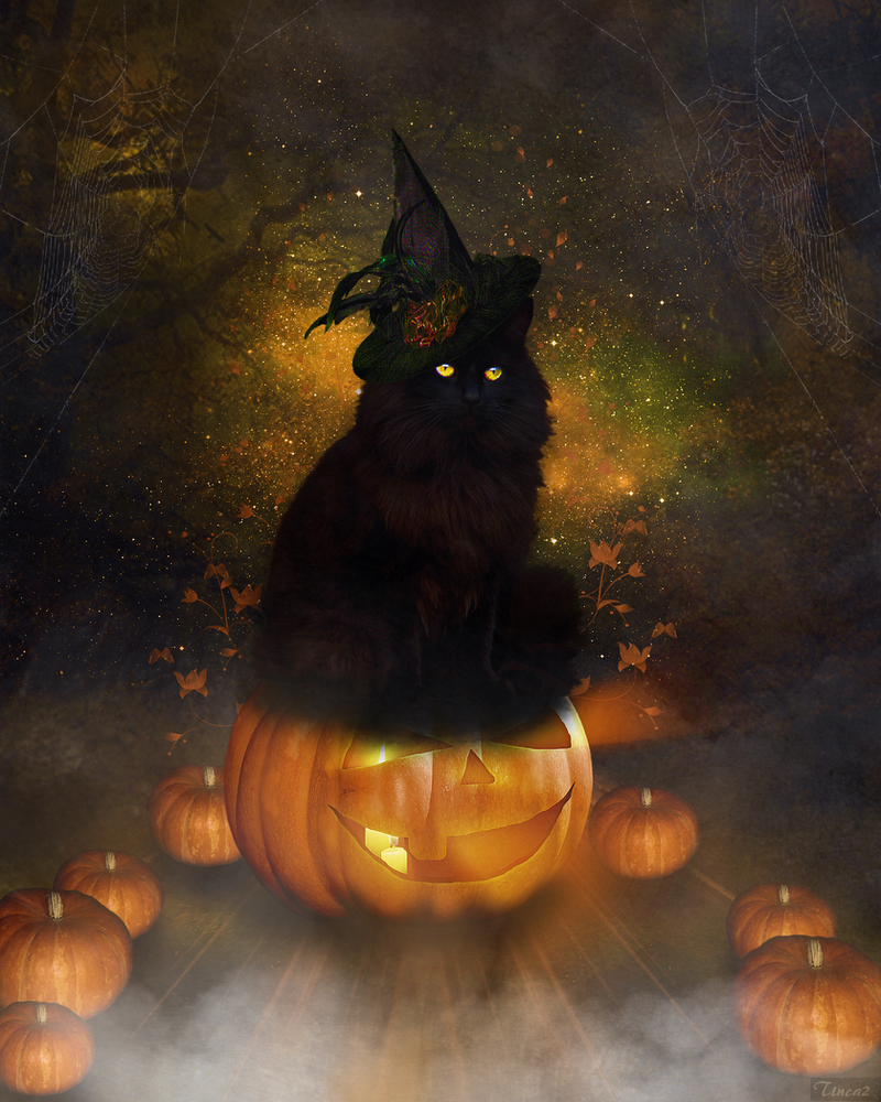 halloween cat by tinca2 on deviantart. Black Bedroom Furniture Sets. Home Design Ideas