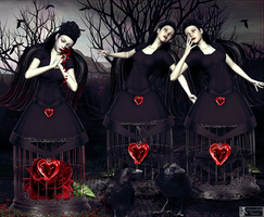 Sisters of roses by tinca2