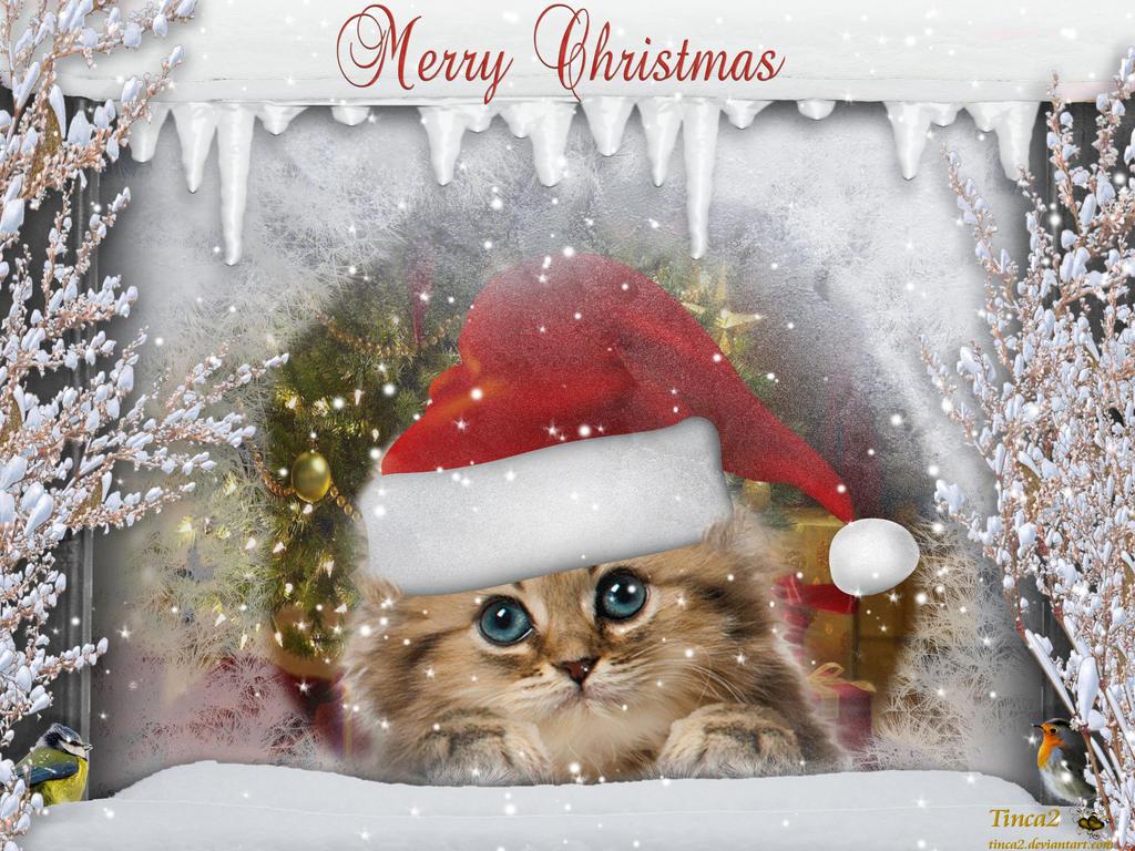 xmas cat by tinca2 - Merry Christmas Cat