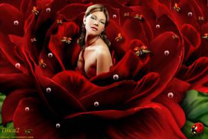 Ladybug by tinca2