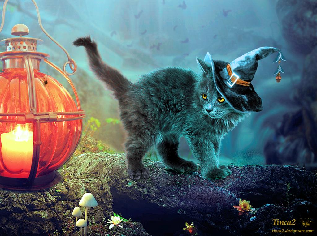 Halloween Kitty by tinca2