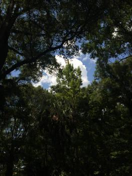 peeping clouds