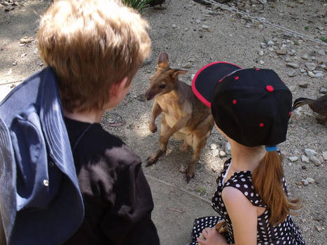 Kids and wallaby