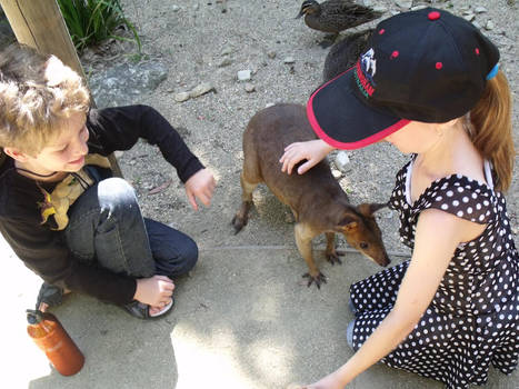 Wallaby and kids