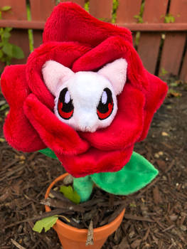 Rose Kitty