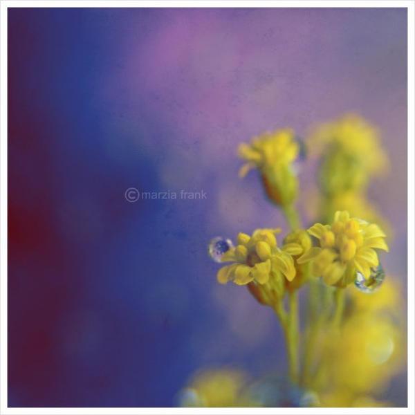 Purple by krylty