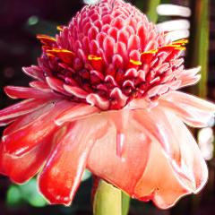Pink Flower Avatar
