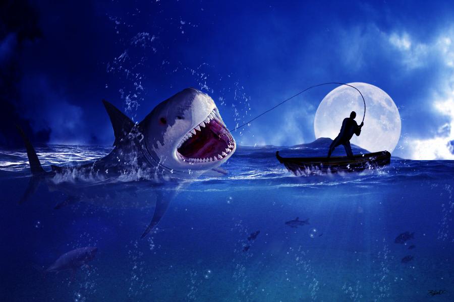 Fisherman and the Shark