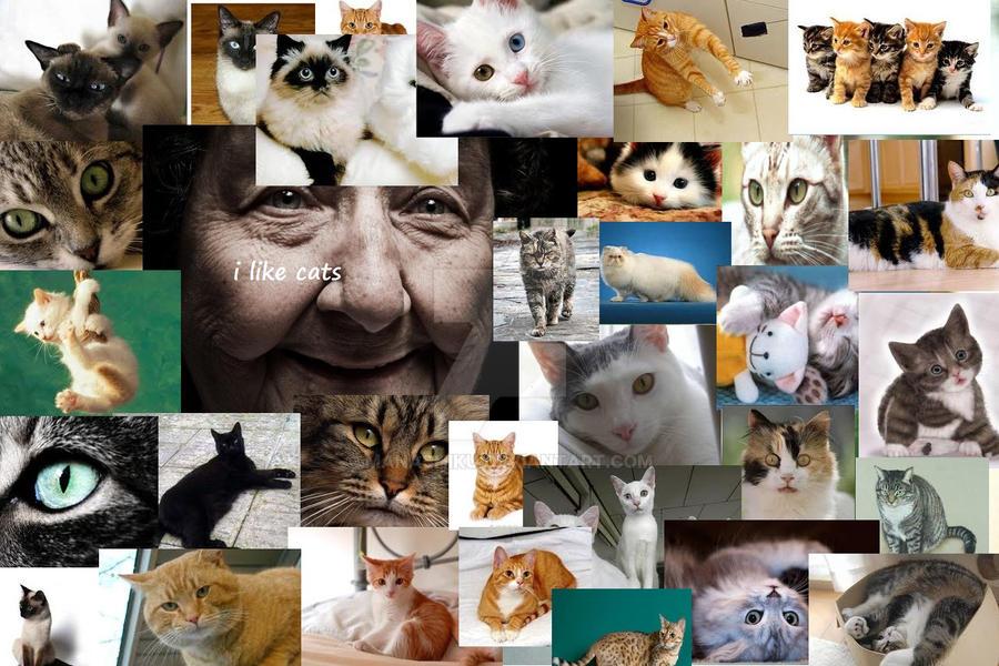 I LIKE CATS by manashiku
