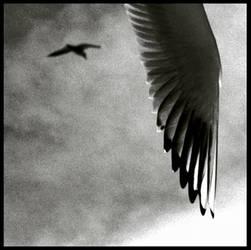 birdy by mharmanlikli